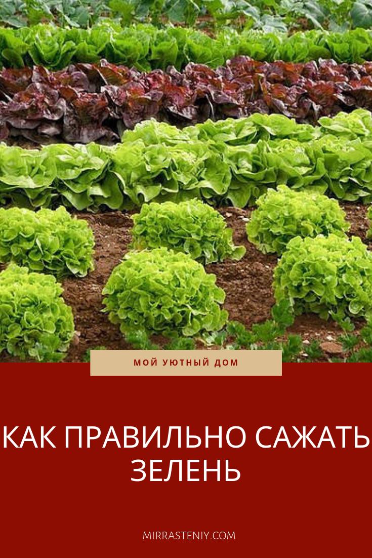 единственный истории перечень зелень для посадки на огороде фото всему