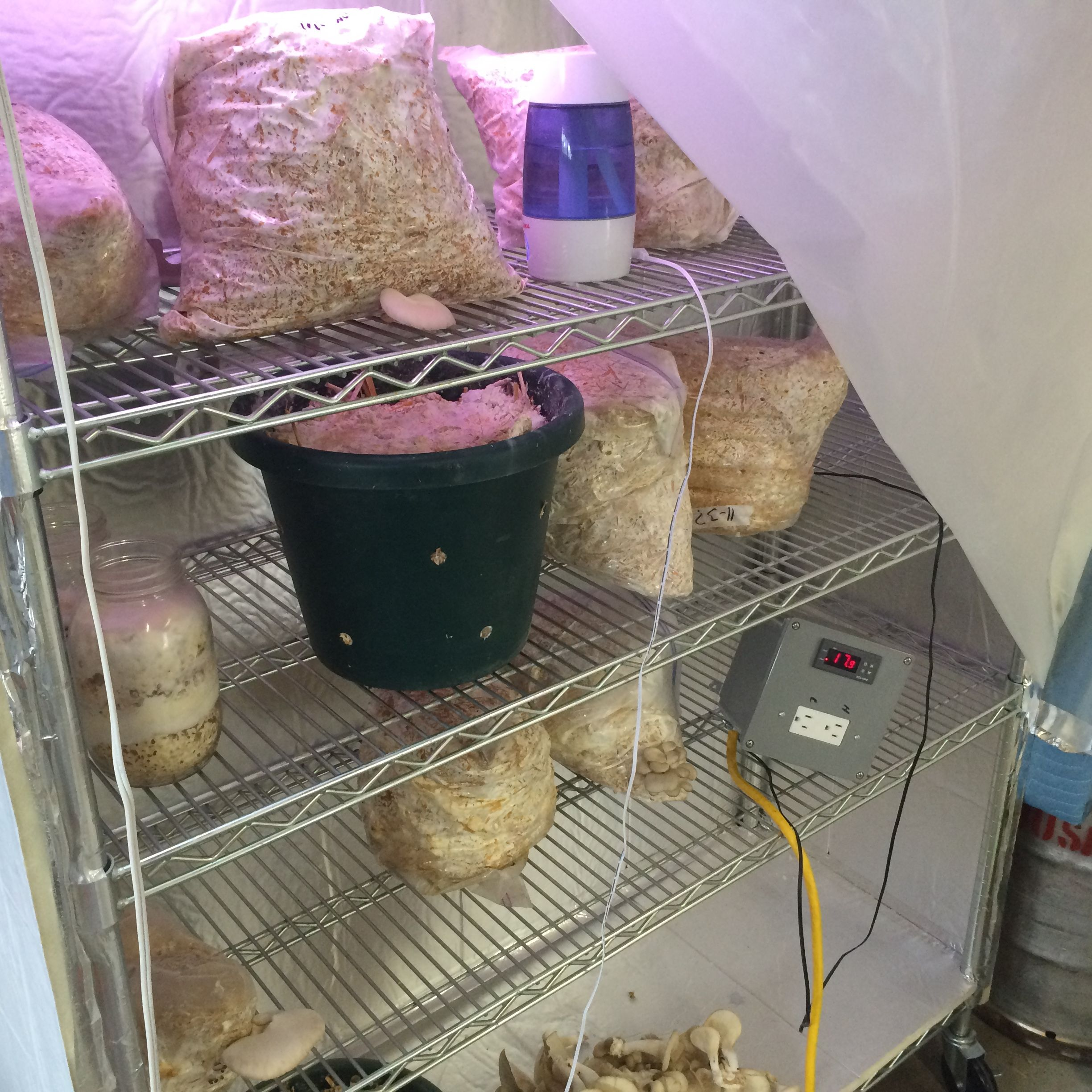 home made, low cost growing chamber  note the humidifier and