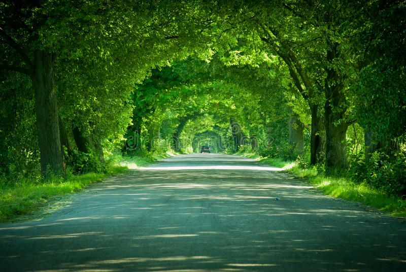 The Road In A Green Arch Of Trees The Road In A Green Corridor Of Trees Affiliate Green Road Arch Corridor Trees Ad Road Green Corridor Tree