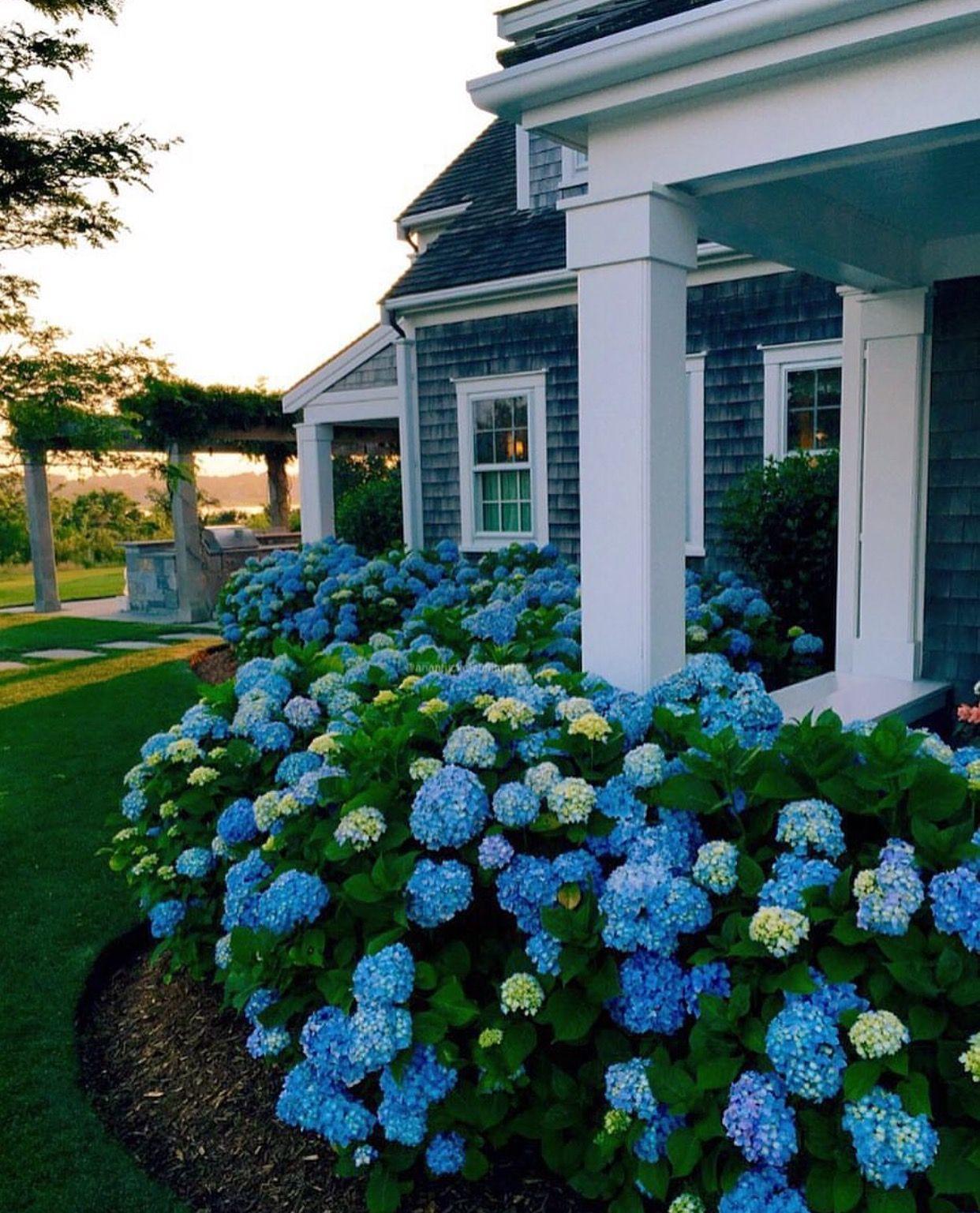 via @kristywicks #worldsuniquedesigns #loveit #blue #green #design #landscape #landscapedesign #landscapedesigner #exterior #exteriordesign #exteriordesigner #designer #tasarım #mavi #yeşil #mimarlık #mimari #mimaritasarım #peyzaj #likelikelike #iloveflowers #hortensia #architecture #architecturedesign