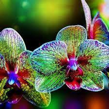 las flores mas extrañas del mundo - Buscar con Google