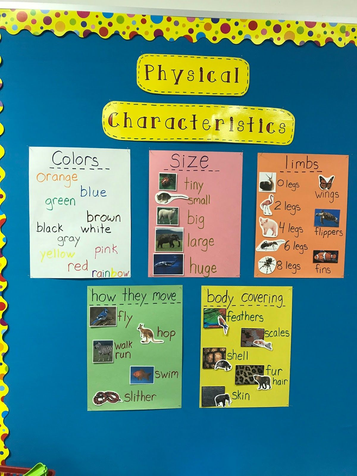 Classroom Zoo Project Studying Animal Characteristics
