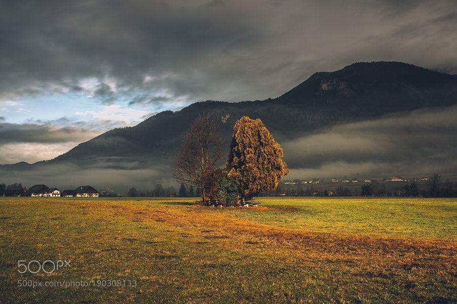 http://500px.com/photo/190308133 One more tree by Ivo_Sokolov -A warm December morning at Lake Wolfgangsee in Austria. Tags: fieldlandscapenaturetravelgrassaustriacountrysidemountaindawnagricultureruraloutdoorsösterreichwolfgangseereithno personabersee