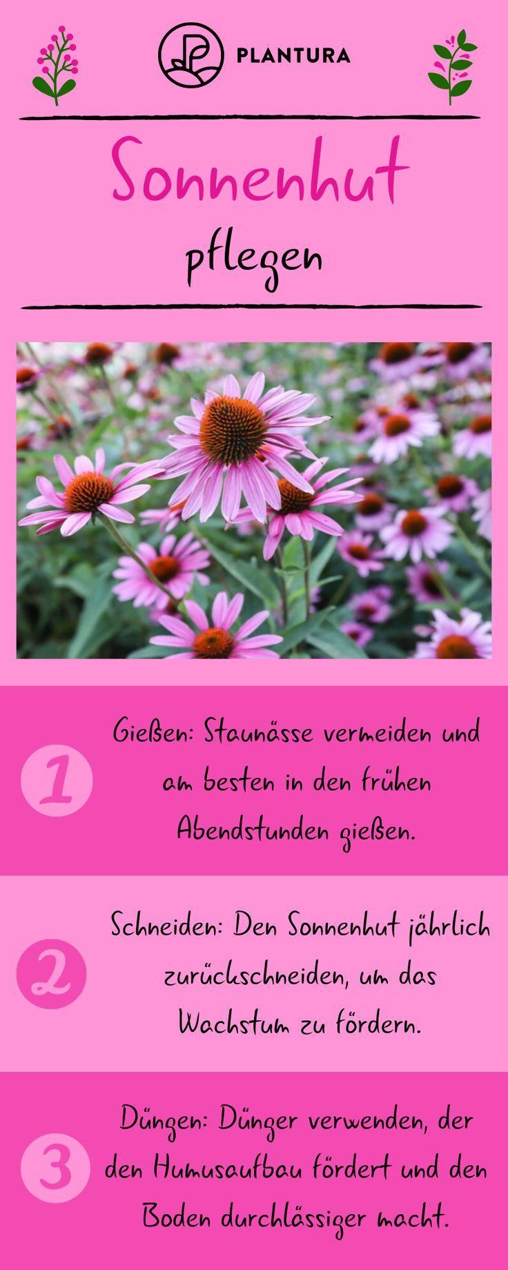 Sonnenhut: Experten-Tipps zum Anpflanzen, Schneiden & Vermehren - Plantura