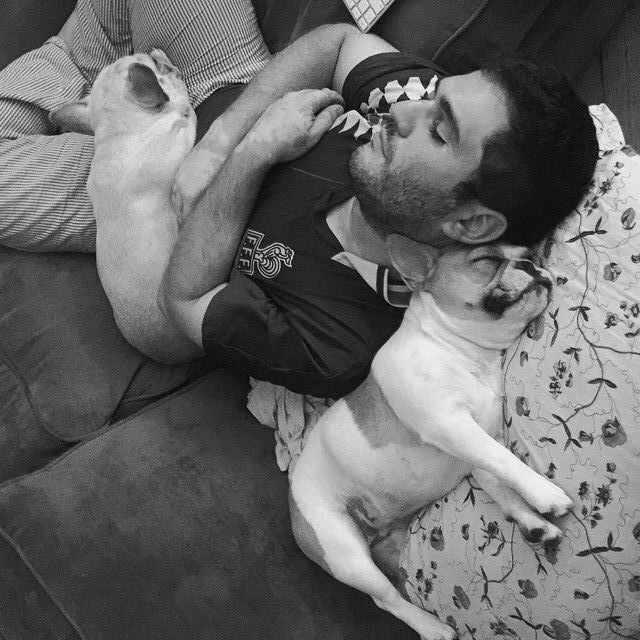 French Bulldogs sleeping with Daddy, via the Evil Adventures of Turtle Bat Pig tumblr.