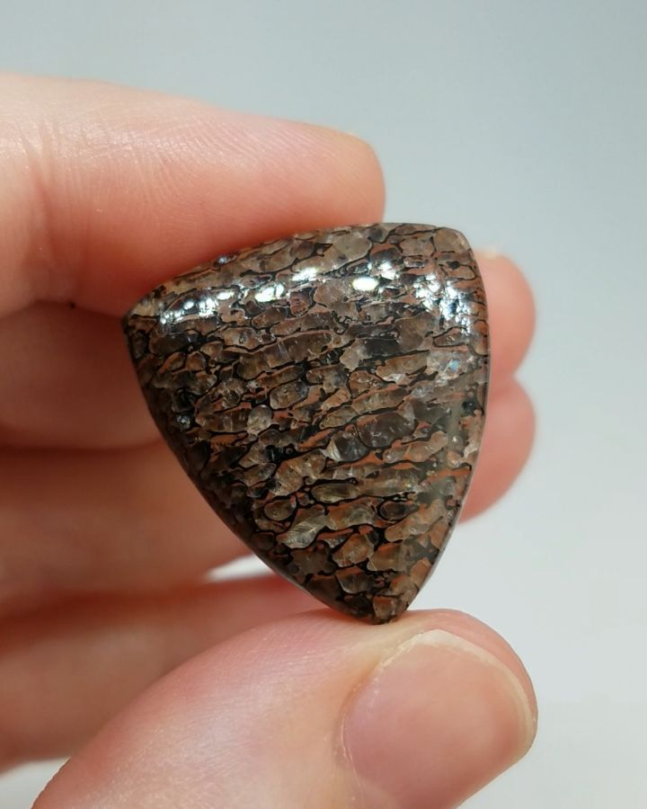 Price: $68 Natural Dino Bone, unbacked and has Natural pitting . First to comment with