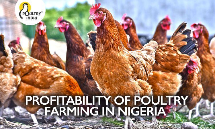 PROFITABILITY OF POULTRY FARMING IN NIGERIA . .