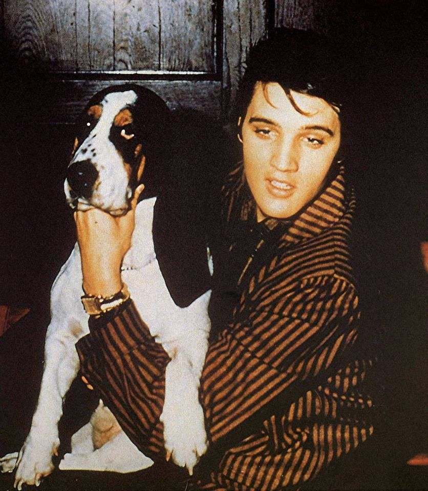 Elvis with hound at the press conference at the Saddle and Sirloin Club - Mar. 28, 1957.