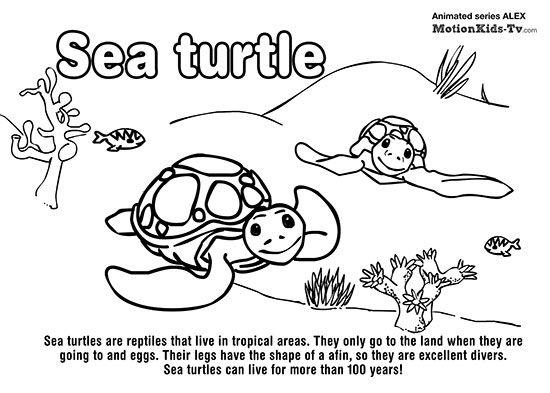 Sea Turtle Sea Animals Coloring Pages Tortugas Marinas Tortuga Infantil Tortuga Marina Dibujos