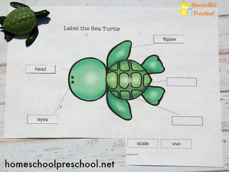 Sea Turtle Life Diagram Blank Wiring Diagram Portal