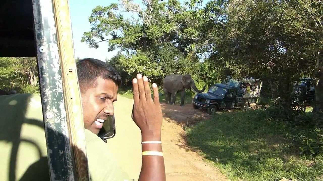 Elephant attacks in Yala National Park, Sri Lanka