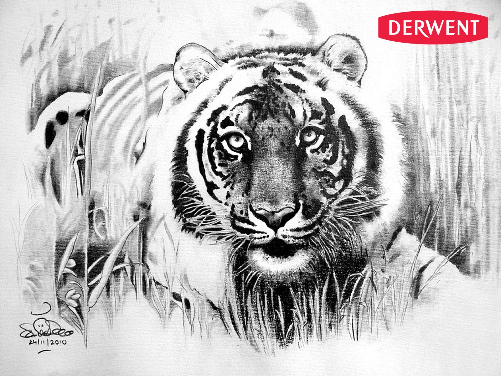 bengal tiger by sumit dascreated using sketching coloured