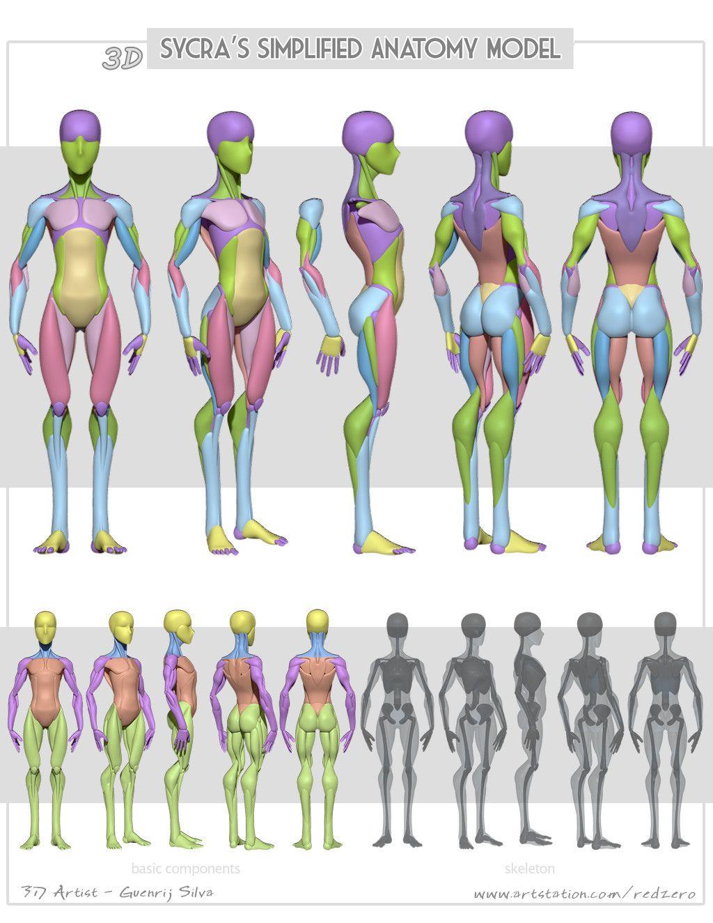 3D Sycra´s Simplified Anatomy, Guenrij Silva on ArtStation at https ...