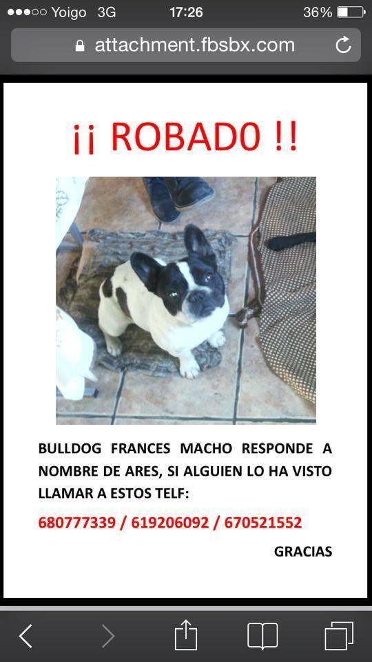 La Protectora de Burgos,pide cooperación, para encontrarlo. Necesitan nuestra ayuda.  Última hora, el perro volvió a su casa, más delgado, pero está bien.   ENCONTRADO!!!! VOLVIÓ A CASA ÉL SOLITO.