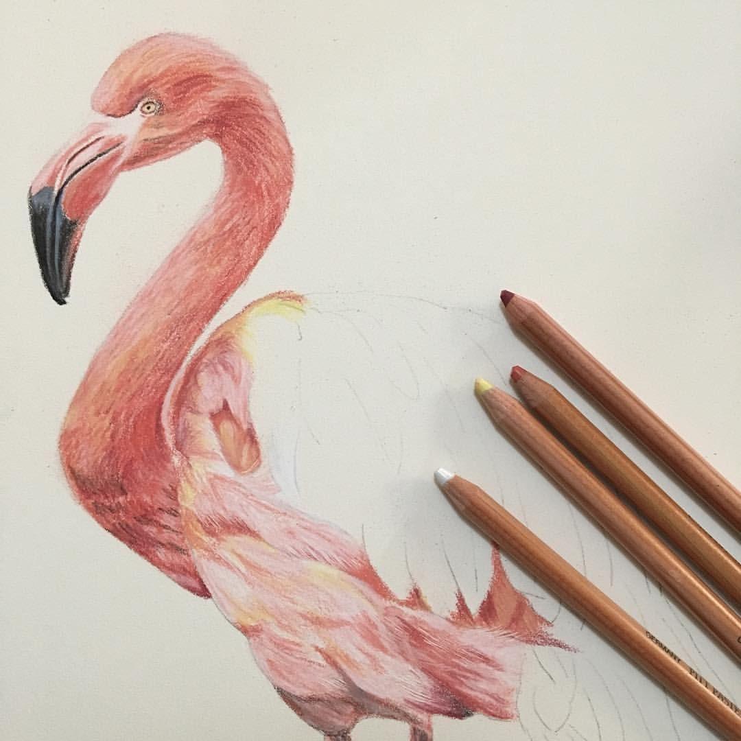 картинки карандашом фламинго средние америке созданием гетто