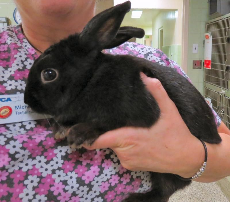 Adopt January Jones Rabbit In Foster Home On Petfinder Foster Home The Fosters January Jones