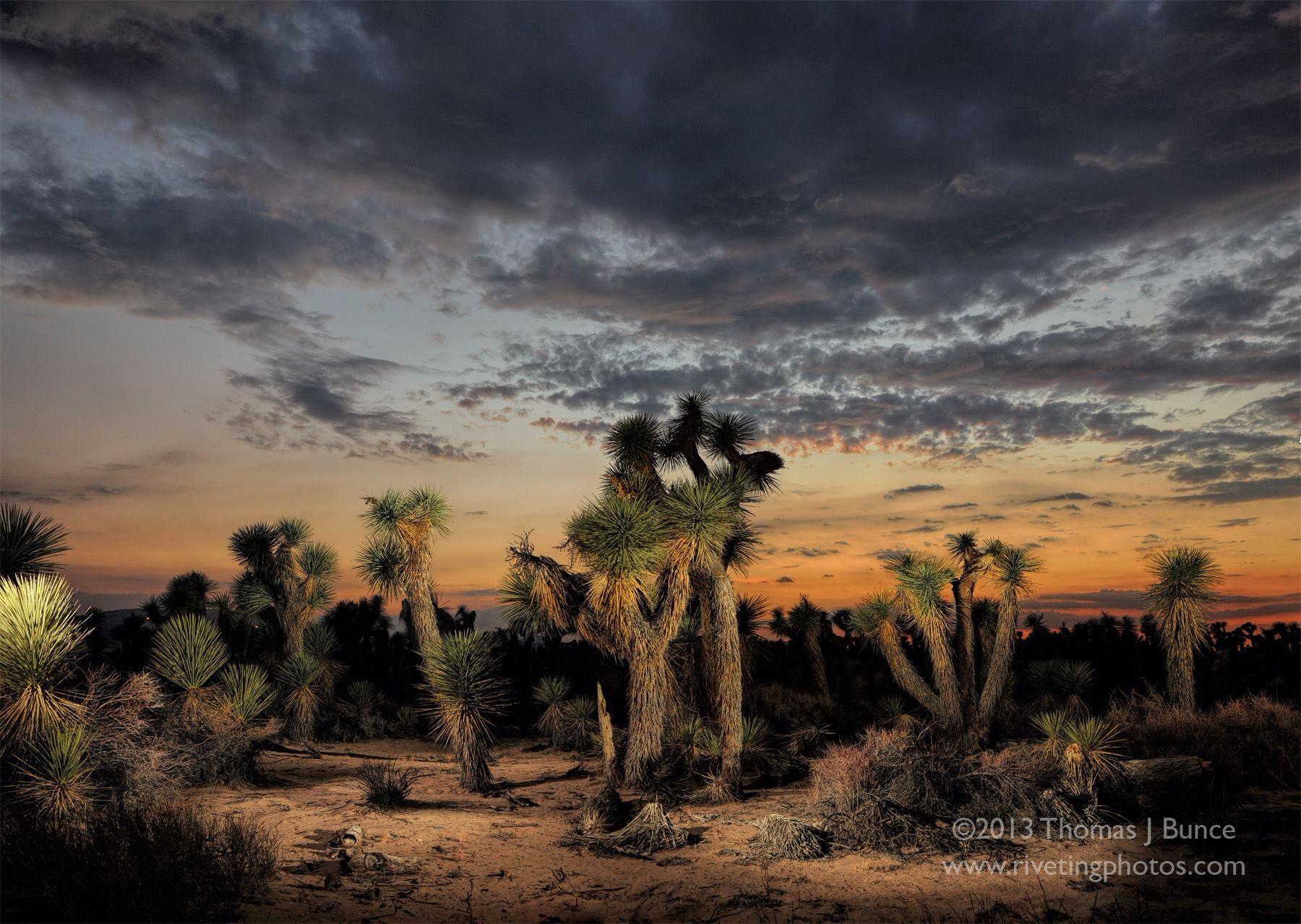 Mohave Desert, near Lancaster, CA (With images) Desert