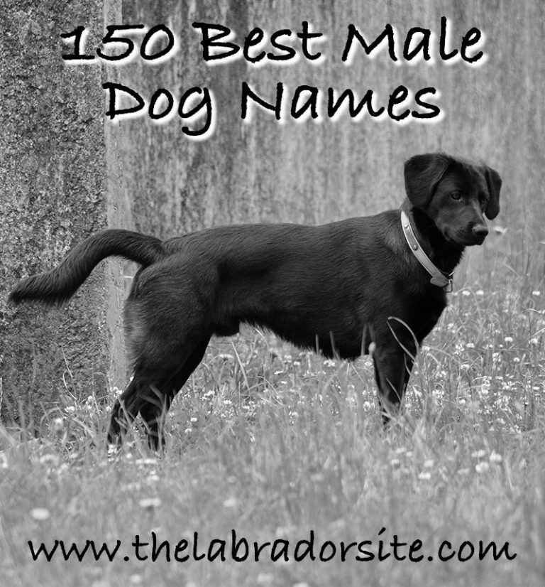 Male Dog Names 150 Brilliant Boy Puppy Name Ideas Dog Names