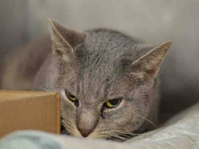 Safe Nyc Sweet Boy Lost His Home To Be Destroyed 03 27 15 Multiple Cats Are In The Household All Were A Bit Wary But No Ag Cats Dog Adoption Pet Adoption