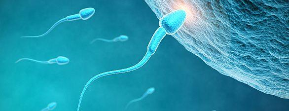 Spermium dringt in Eizelle ein Wir Menschen tauschen nicht nur untereinander Erbgut aus, sondern angeblich auch mit anderen Lebewesen. Biologen machten nun eine neue Bestandsaufnahme.