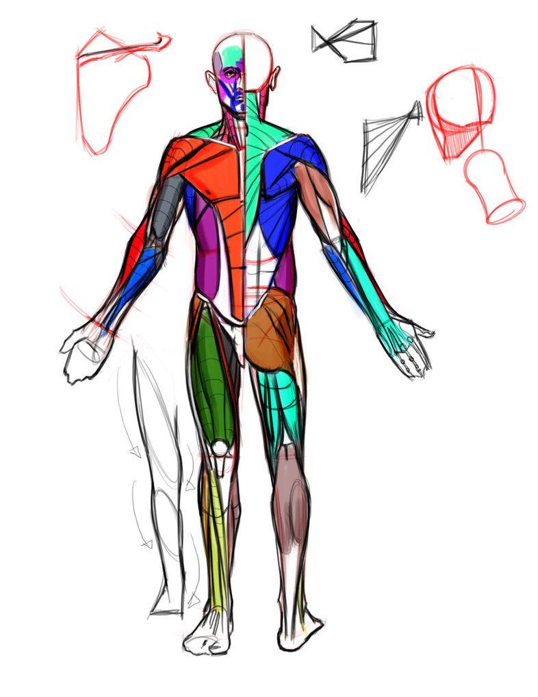 Anatomy Crash Course Demo By Funkymonkey1945iantart On