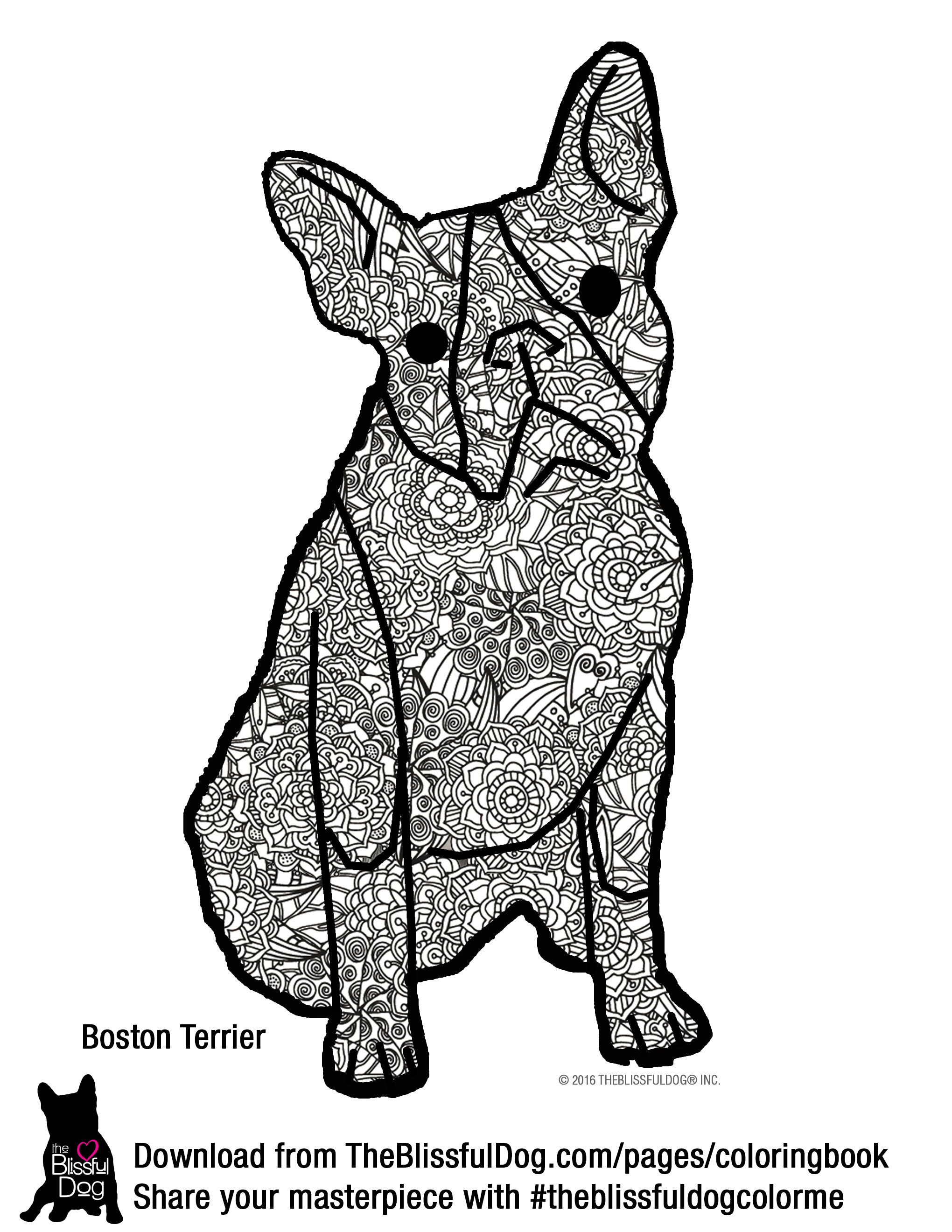 This Boston Terrier wants to lead a more colorful life...give a dog ...