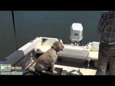 Dog Training, Moose, Golden Retriever, Day 8 Fishing Training Out on Lake Lanier hot HD - http://www.7tv.net/dog-training-moose-golden-retriever-day-8-fishing-training-out-on-lake-lanier-hot-hd/