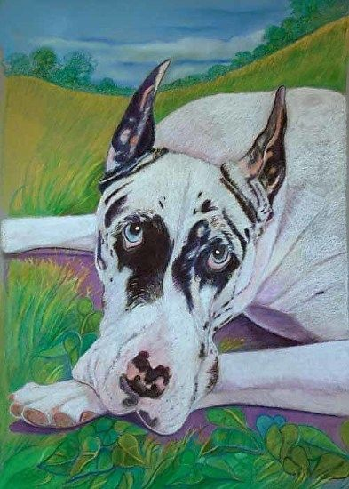 Pin By Toya Powell On In Love With Great Danes Harlequin Great
