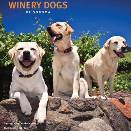 Winery Dogs Of Sonoma Photography Book Labrador Hulotte
