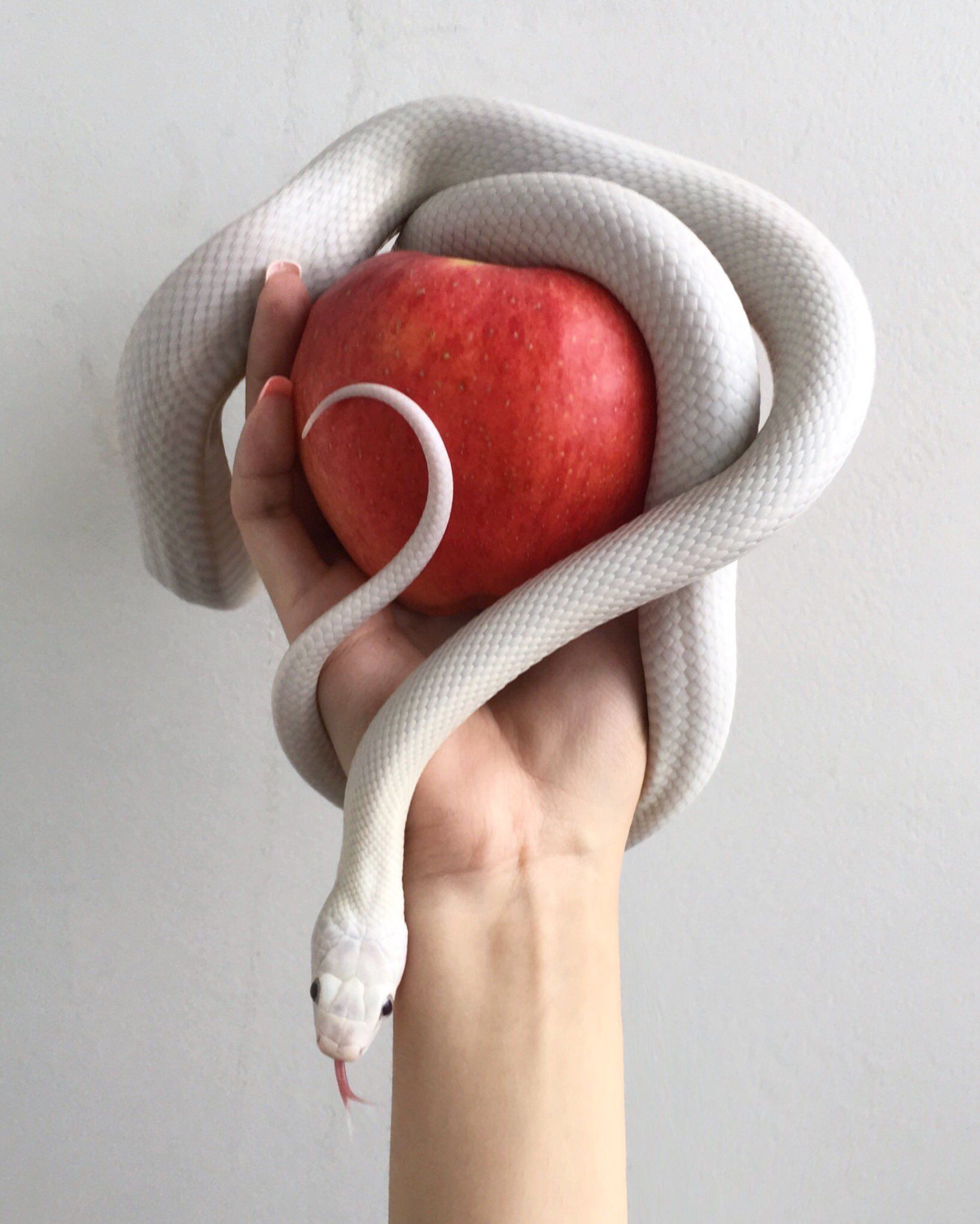 Pin by محمدي on Pic mix Cute snake, Cute reptiles, Pet snake