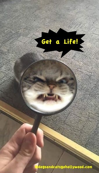 funny cat videos and pictures the battle of the websites pinterest