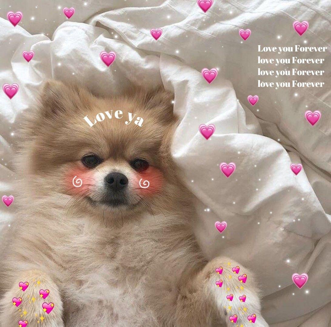Dogs Heart Cute Love Memes Cute Animal Memes Cute Animals