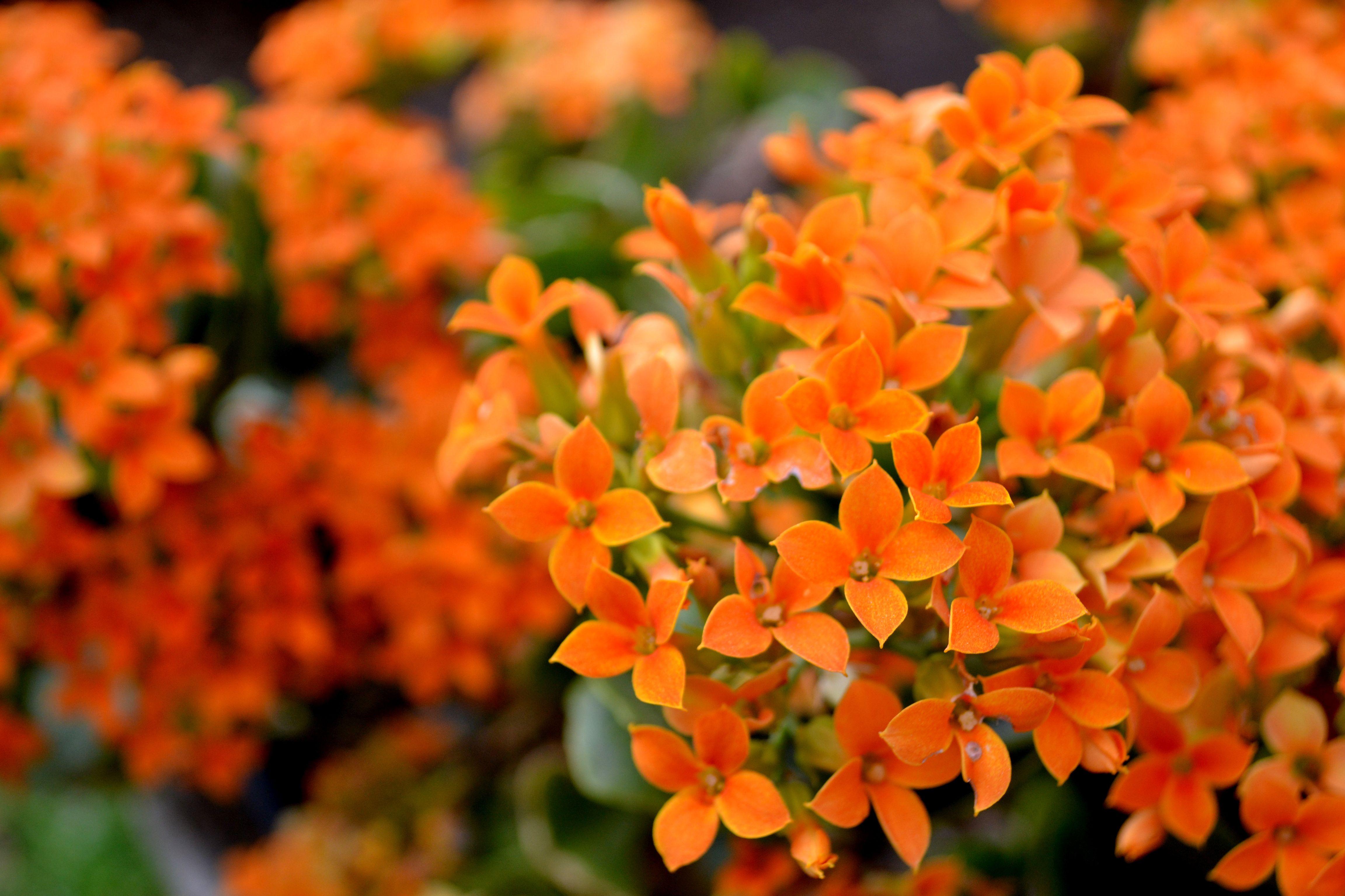 079 Flowers   Orange   Spring flowers Colorful flowers ...