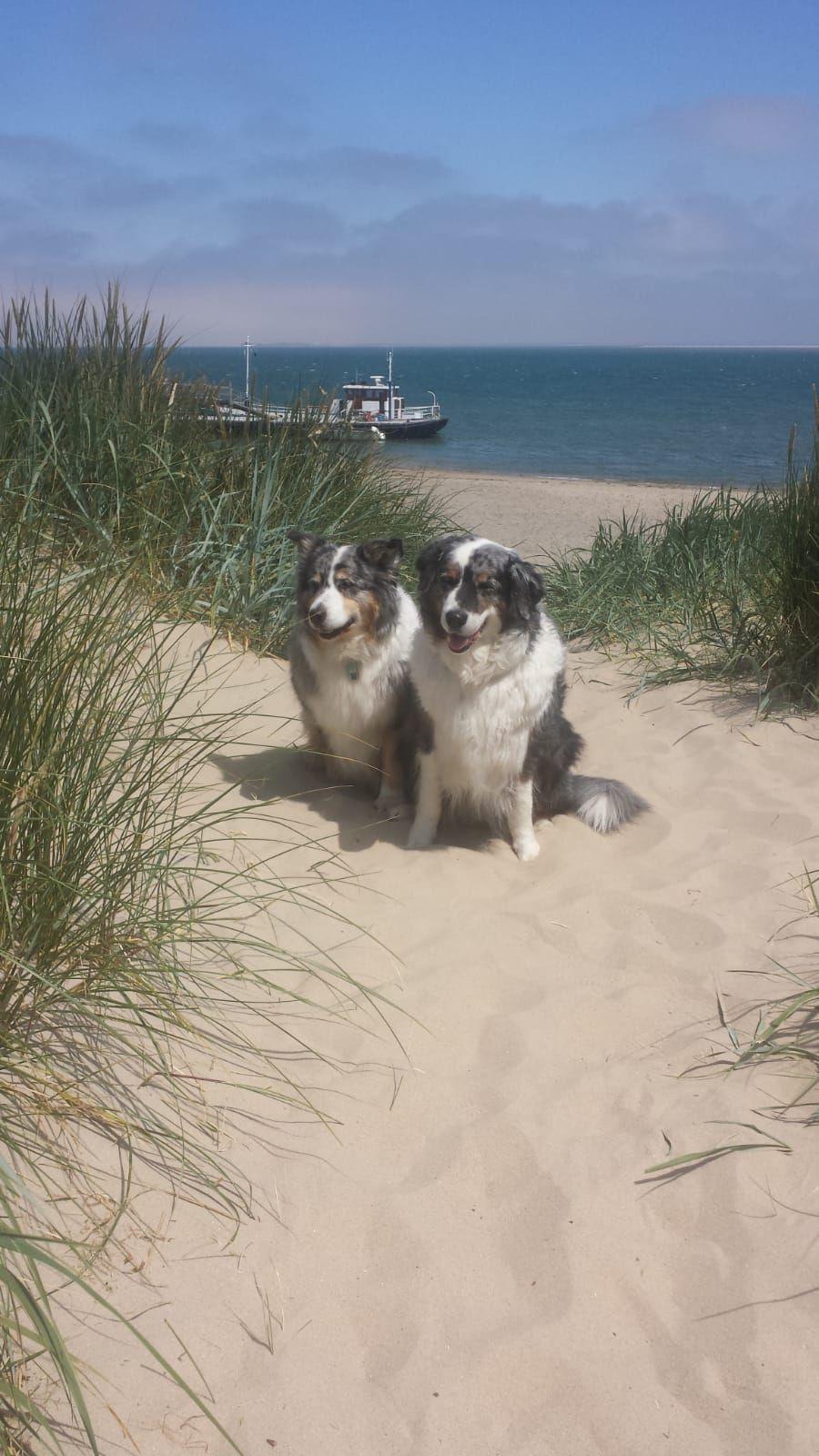 Urlaub mit Hund auf Texel. Danke an Dorothea für das Bild