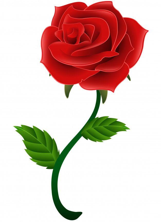 Fleur Rouge Fleur Rose Isole Un Fond Blanc Fleur Rose Fond Floral