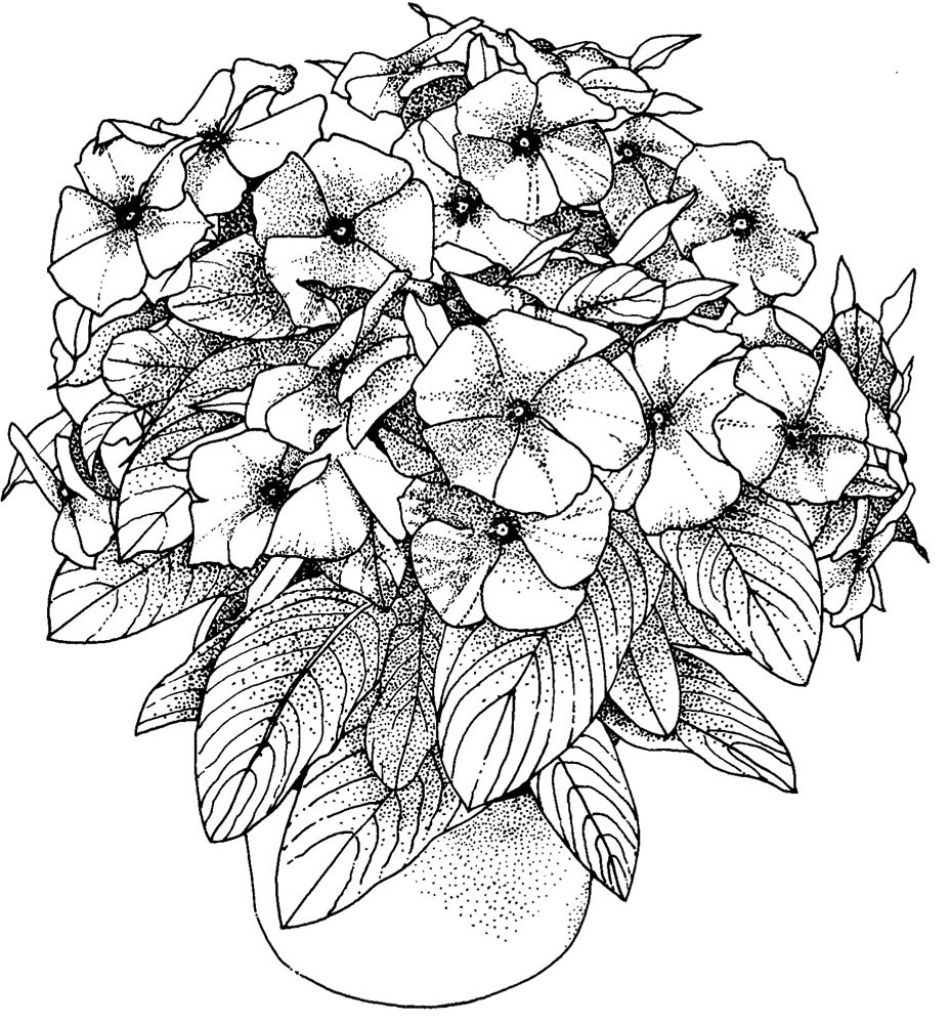Flowers Coloring Pictures For Adults Only Pages
