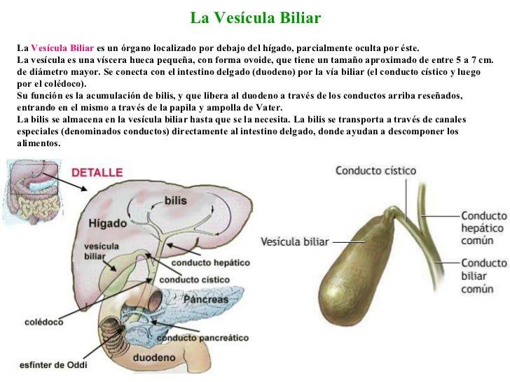 La Vesícula Biliar La Vesícula Biliar es un órgano localizado por ...