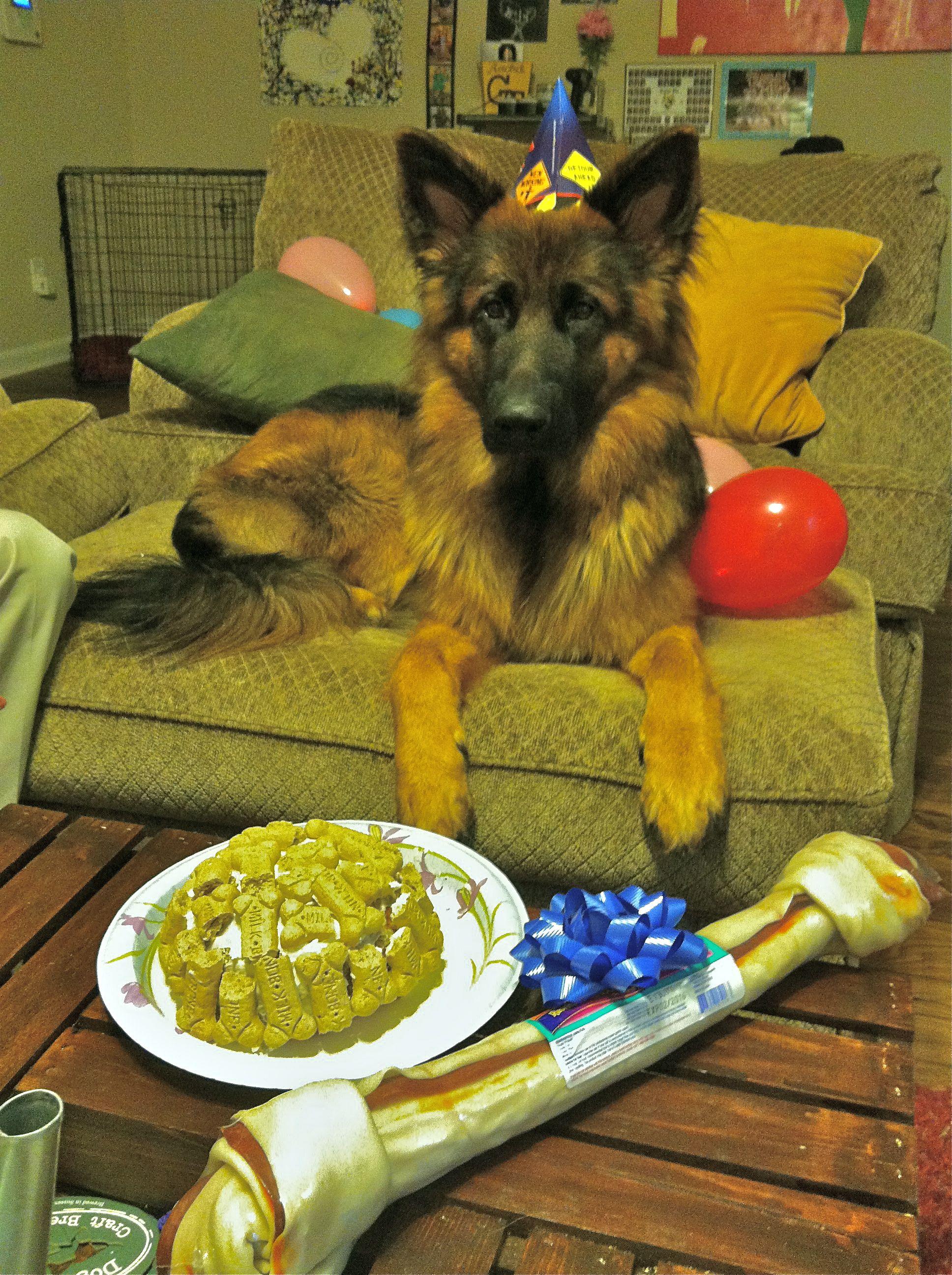 Resultado de imagen para 犬 German Shepherd パーティー