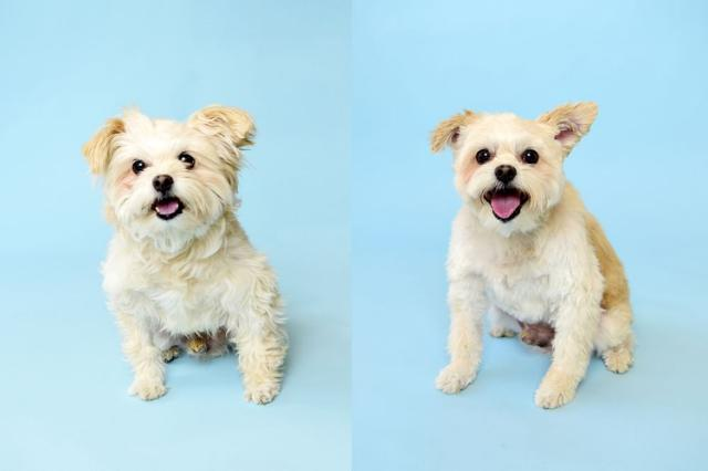 Shelter Dogs Treated to Spiffy Makeovers So They Can Look