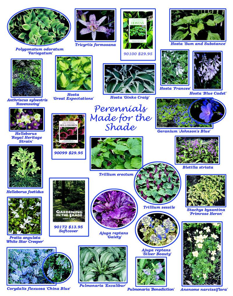 Perennials that are great for shady ferneries ;)