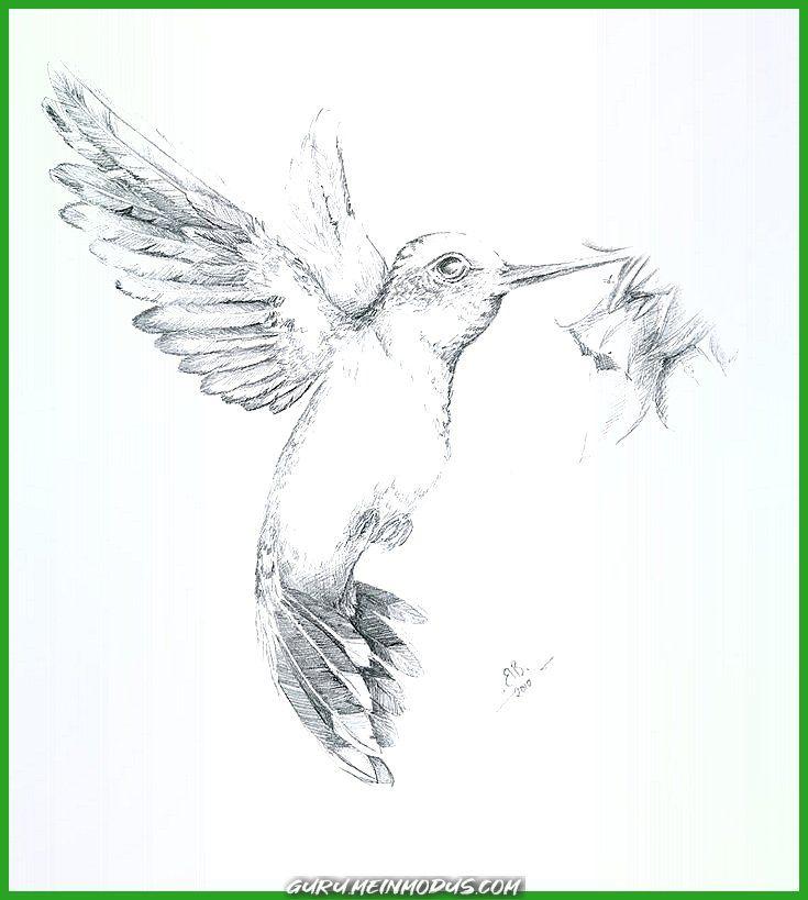 Kolibri Vogels tekenen Kolibrie Dieren tekenen
