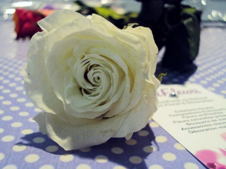Fleurs naturelles stabilisées C\u0027est tellement simple de faire plaisir !  GRANDE ROSE BLANCHE à