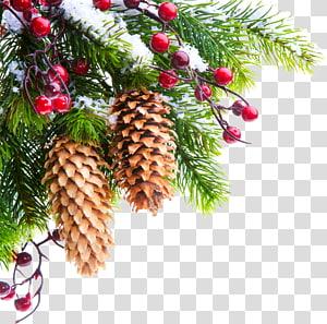 Christmas Tree Branch Pine Cone Transparent Background Png Clipart Christmas Tree Branches Christmas Tree Ornaments Green Christmas Tree