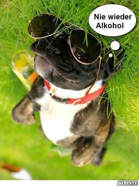 Alkohol Hund