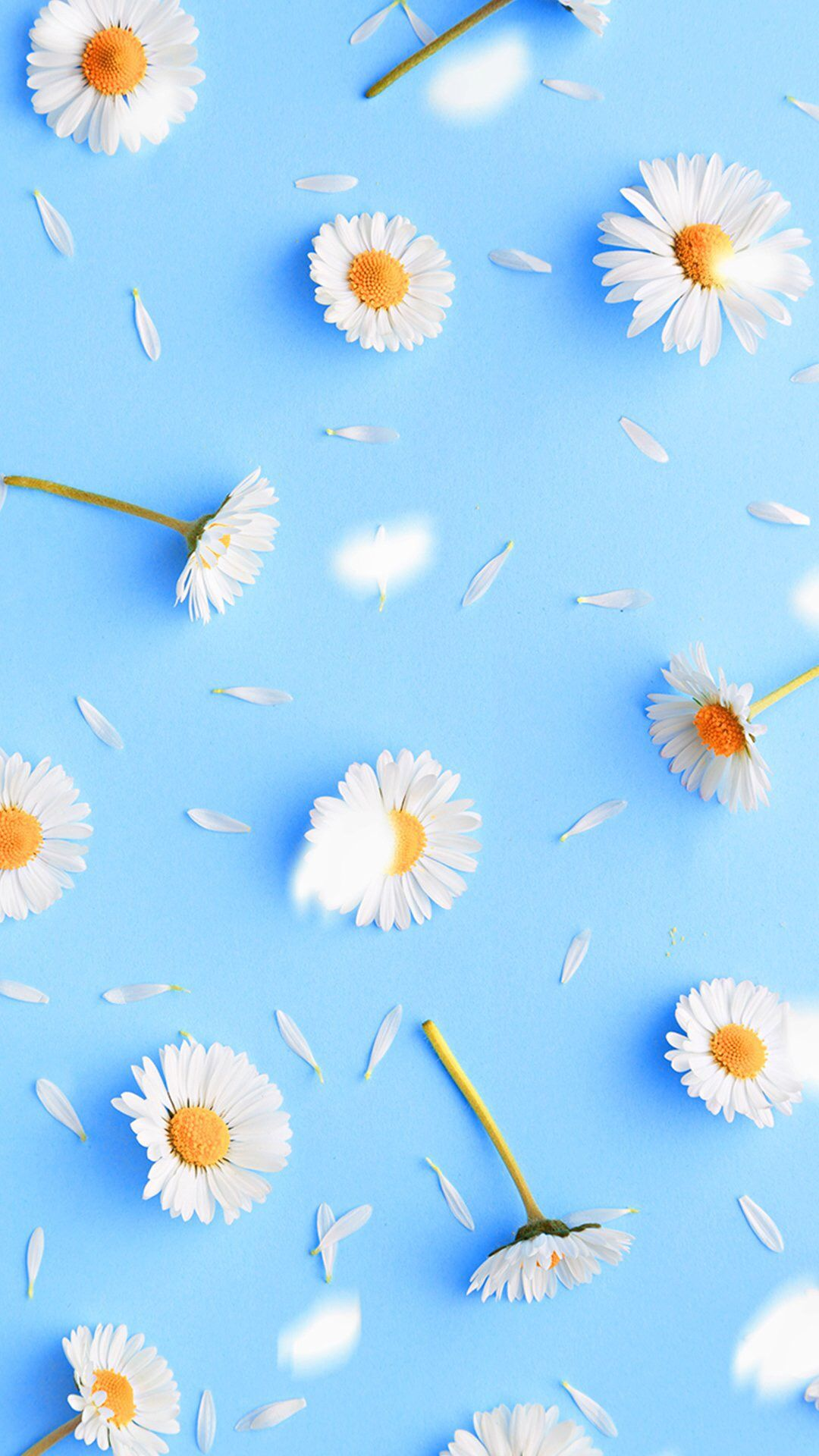daisy iphone wallpaper 1 | top ideas to try | recipes, hairstyles