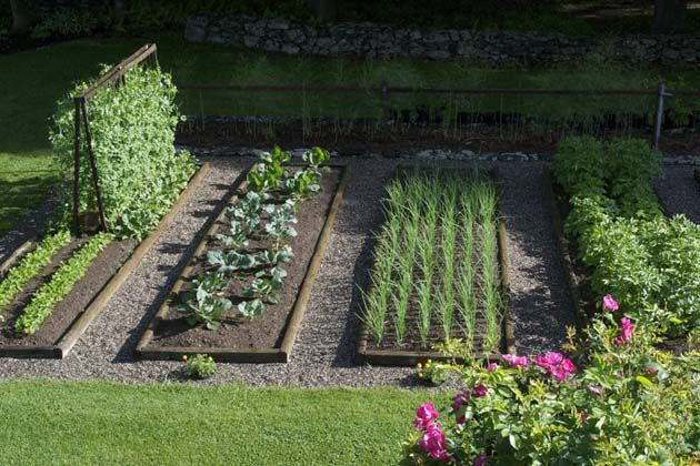 Pin By Uu On House Veg Garden Vegetable Garden Design Vegetable