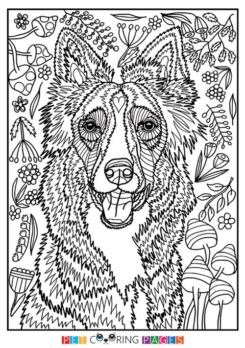 Free Printable Border Collie Coloring Page Available For Download Simple And Detailed Versions Adults