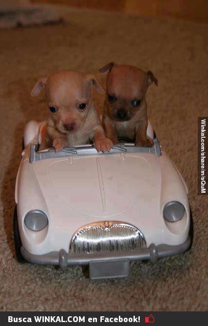 Perros Viajando En Auto Cute Animals Cute Baby Animals Cute