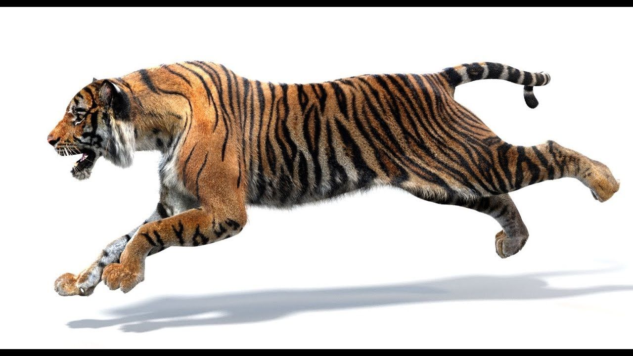 Pin By Promax3d On Tiger 3d Models Run Cycle Tiger 3d Model