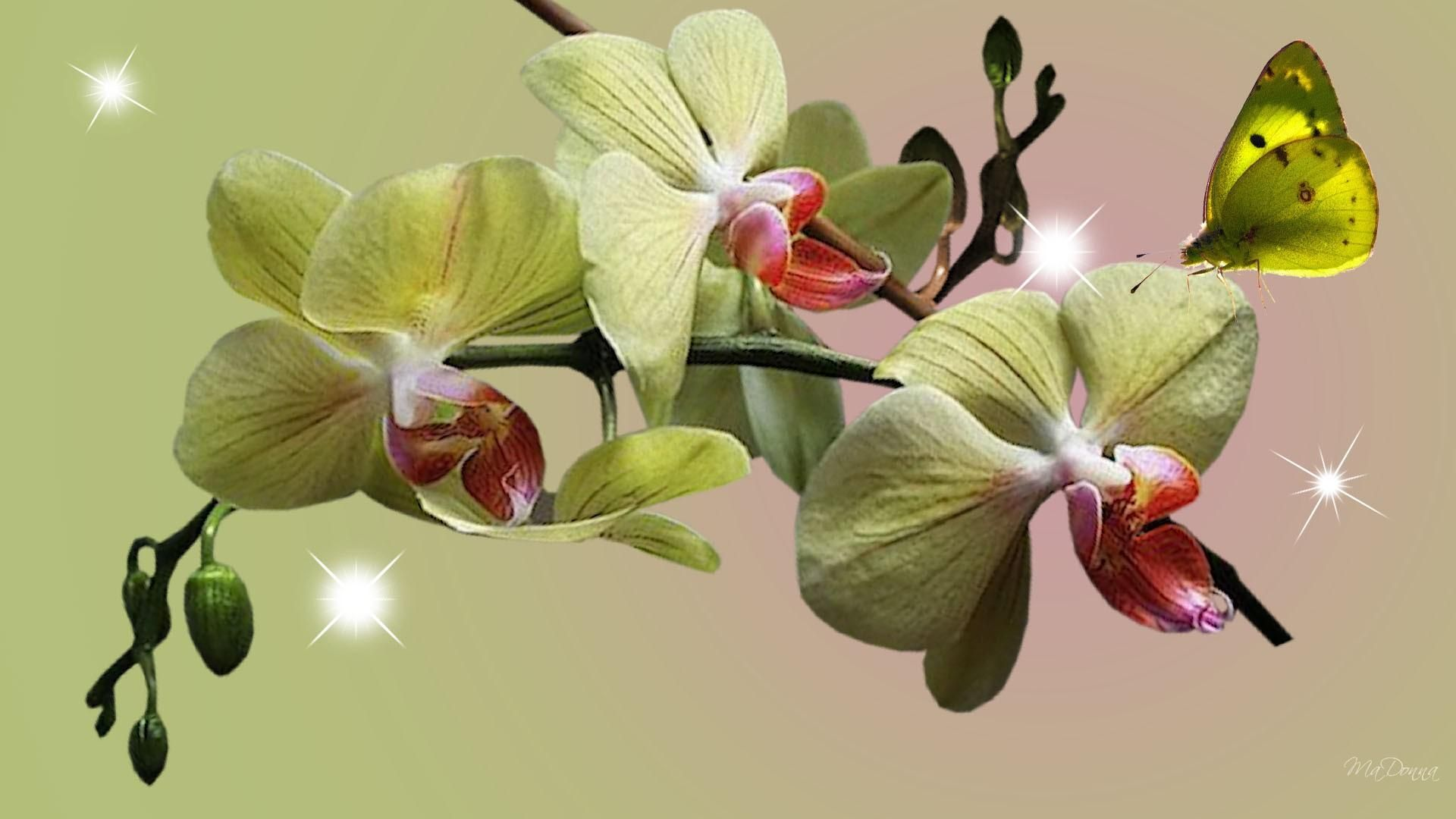 Hd Orchids Green Wallpaper Orchids Beautiful Orchids Green Wallpaper